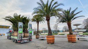Palmen für die BUGA in Erfurt